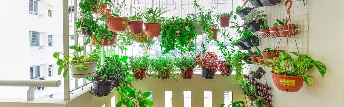 Essential herbs for every edible garden