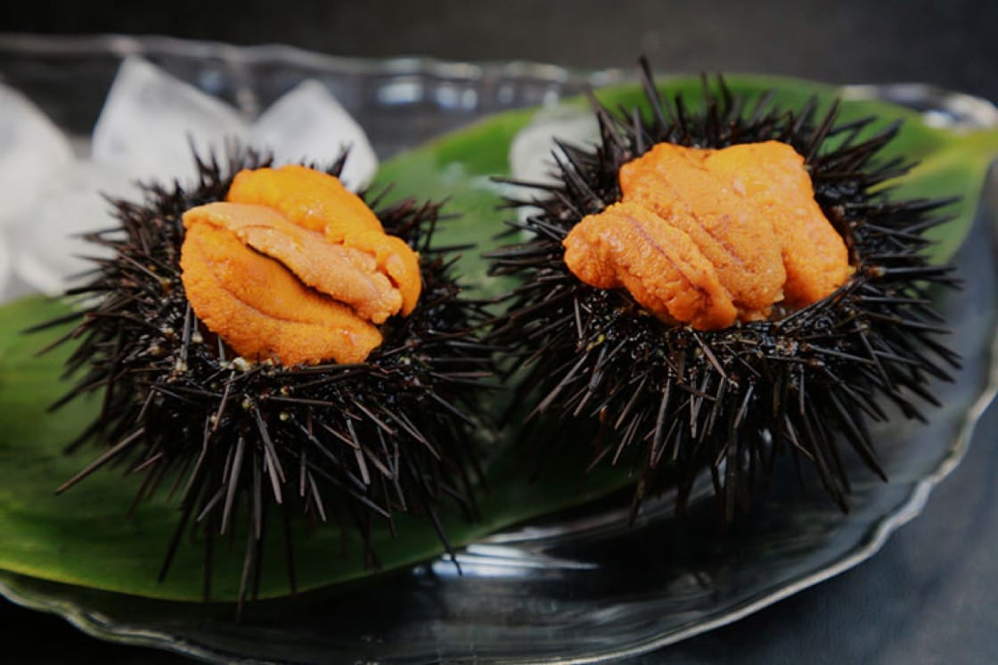 Live uni straight out of their shells
