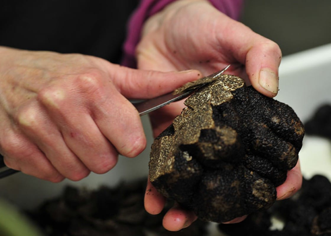 Truffles being sorted and shaved. Photo: Plantin