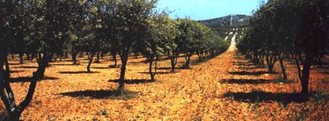 The truffière of French producer Plantin, based in the south of France. Photo: Plantin