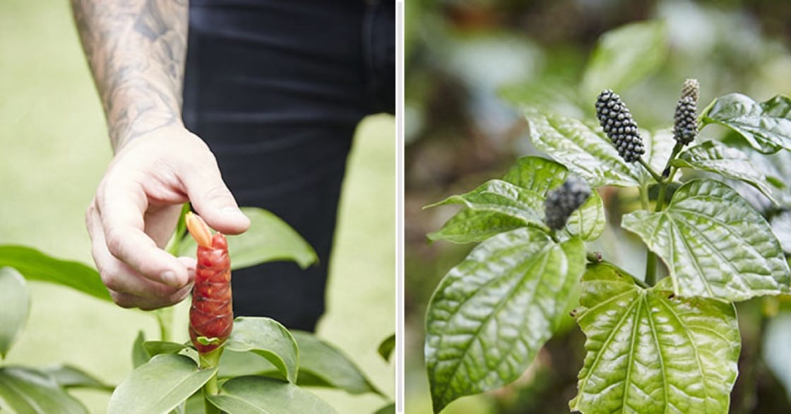 Left: Malay ginger flower buds. Right: Wild pepper