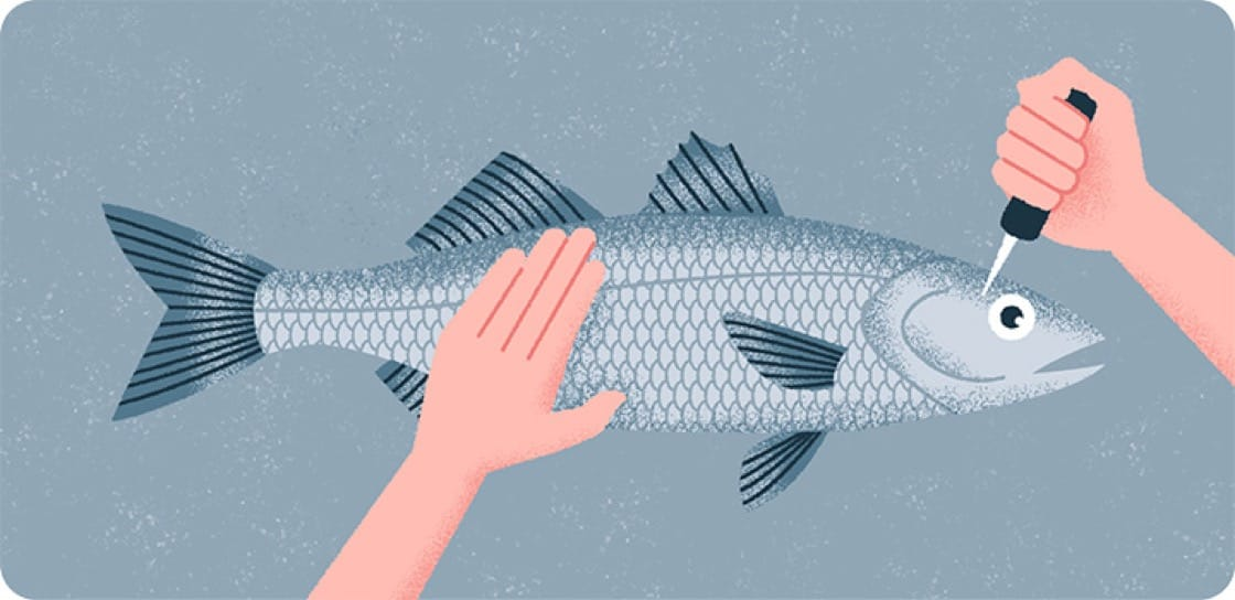 Step 1: Close The Fish | Illustration by: Siow Jun
