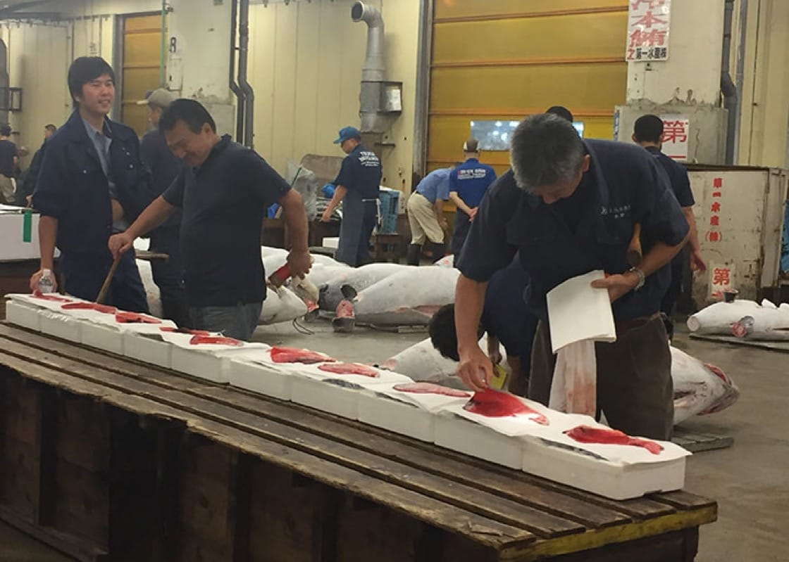 某档主正在视察鲔鱼。拍卖前半小时,投标者要对超过1000条鲔鱼进行评估,作为投标基础。