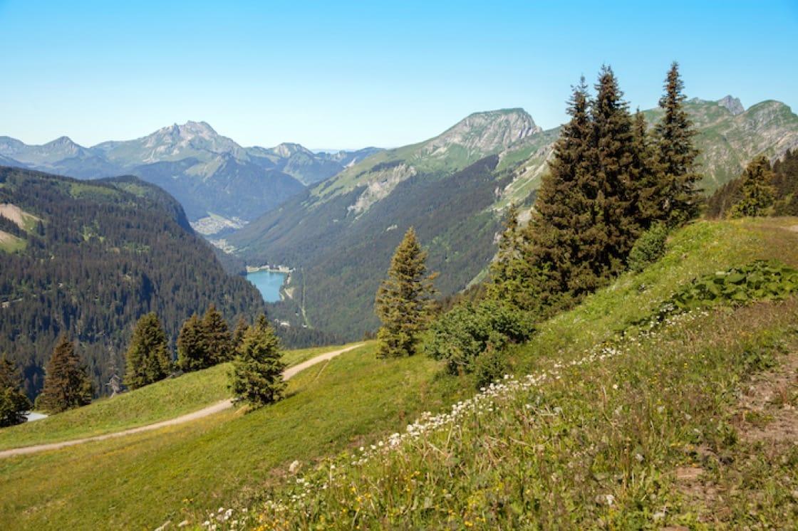 法國薩瓦區的山林。