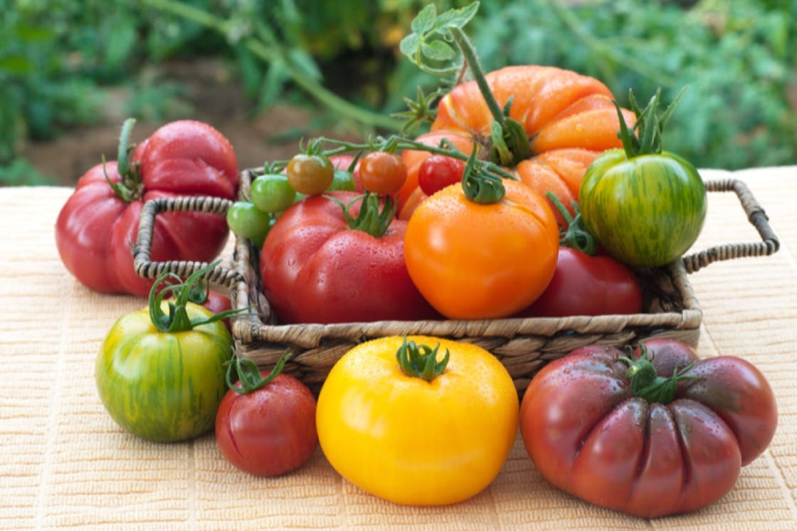 Best way to decide which heirloom tomato you prefer? Taste the rainbow