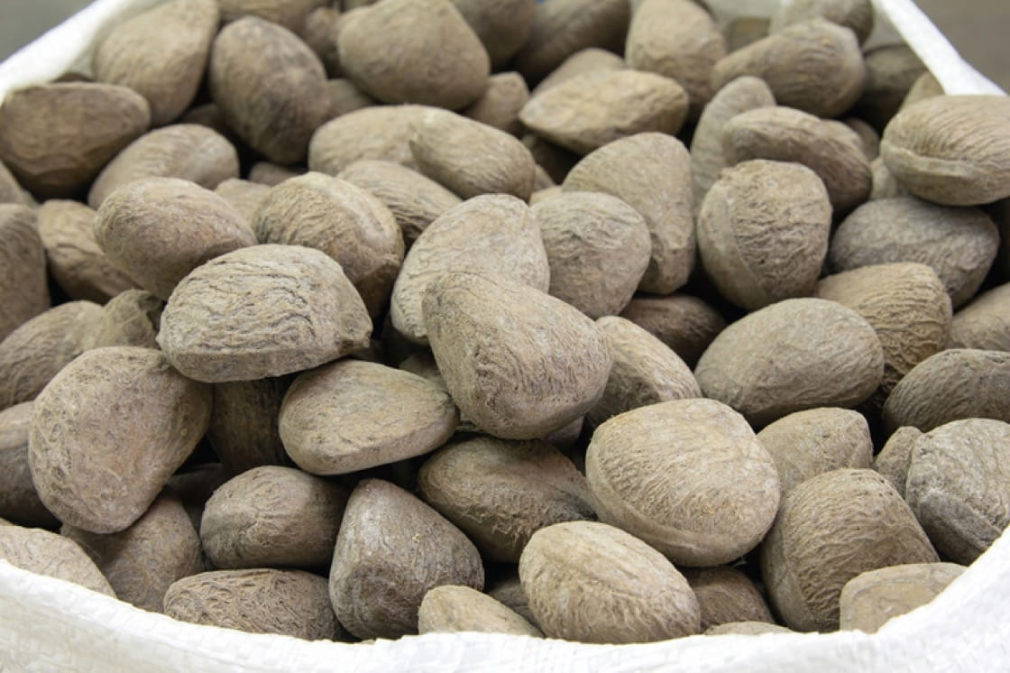 Untreated buah keluak seeds from the kepayang tree