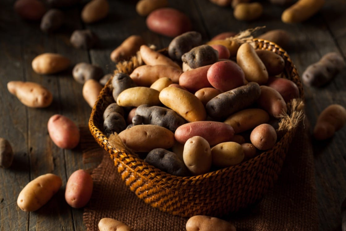 Fingerling potatoes come in a variety of colours