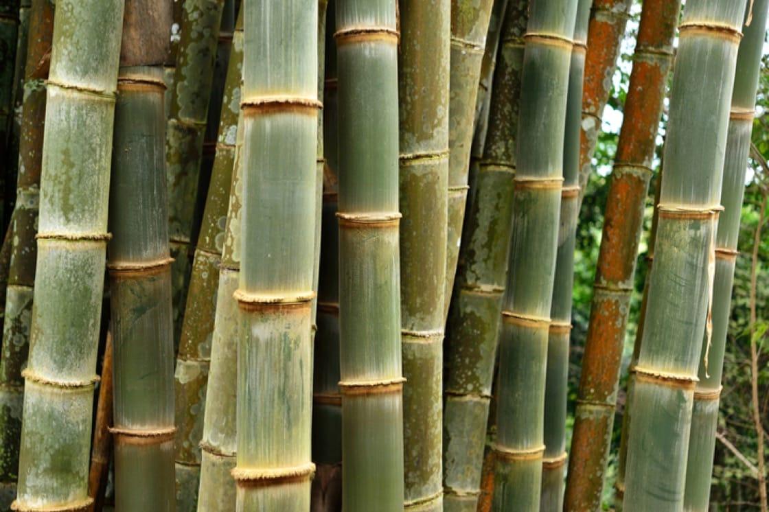 印度尼西亞的 dadiah 是在竹筒裡進行發酵。