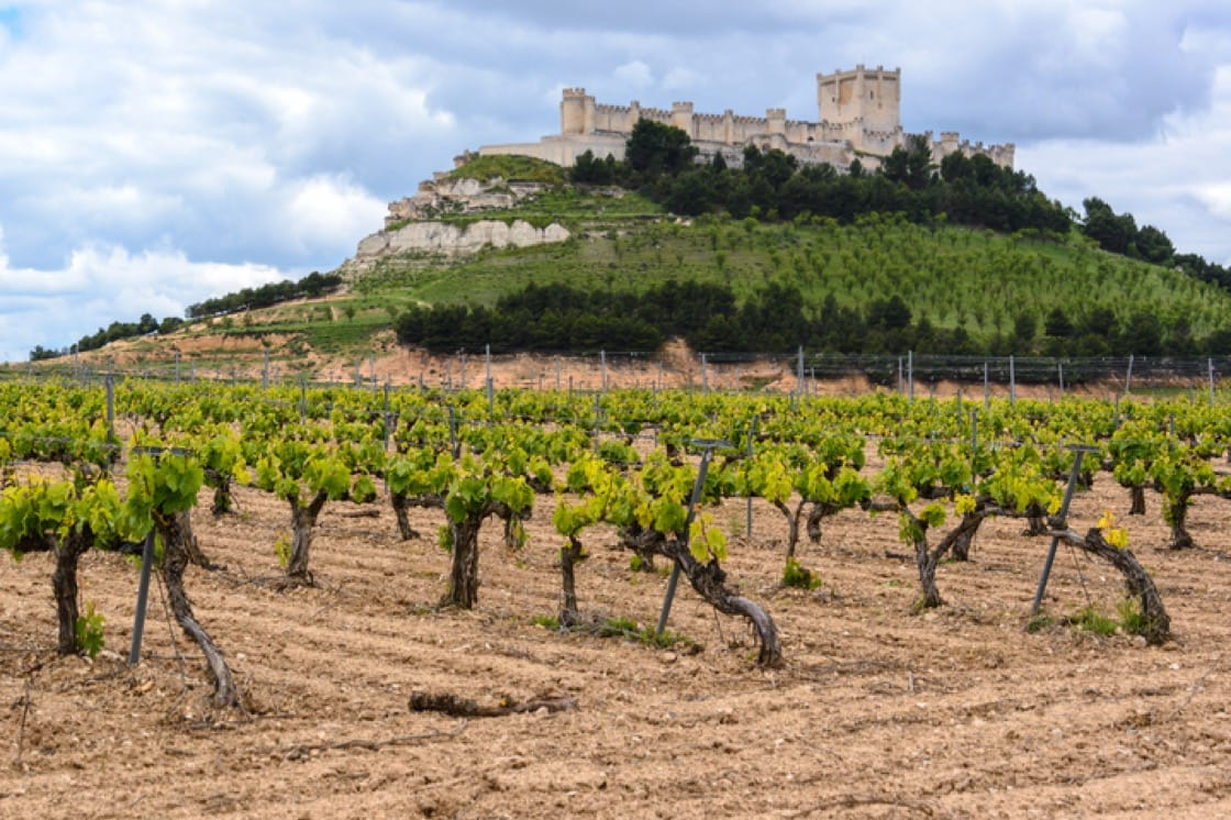 A vineyard in the ancient region of Valladolid.