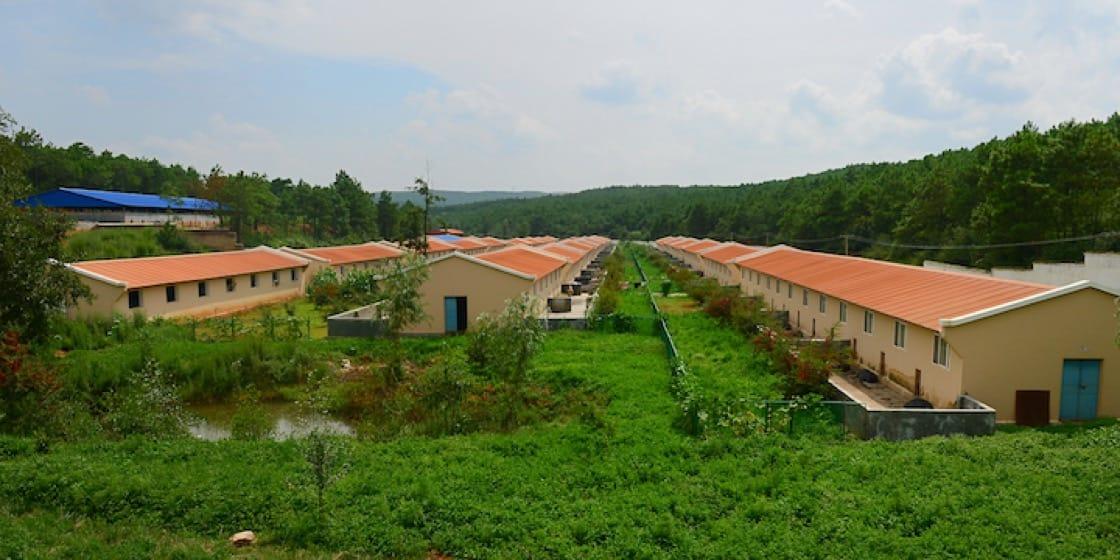 宣威火腿优质原料基地环境。 (摄影:邬智明)