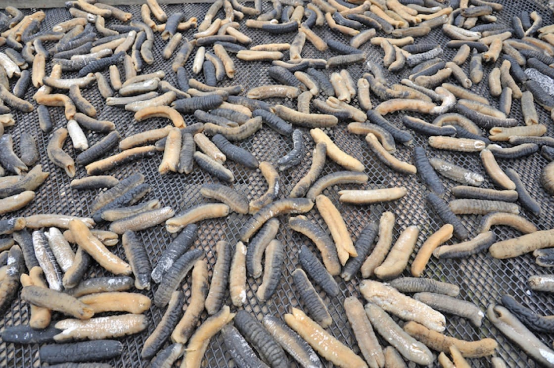 Sea cucumbers during the drying process.