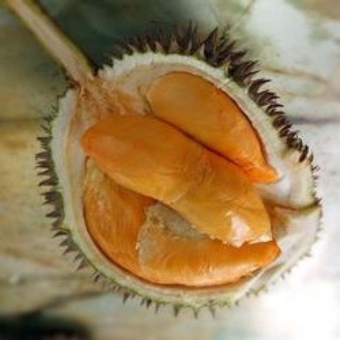 durian guide last chance to catch the first durian season of 2018