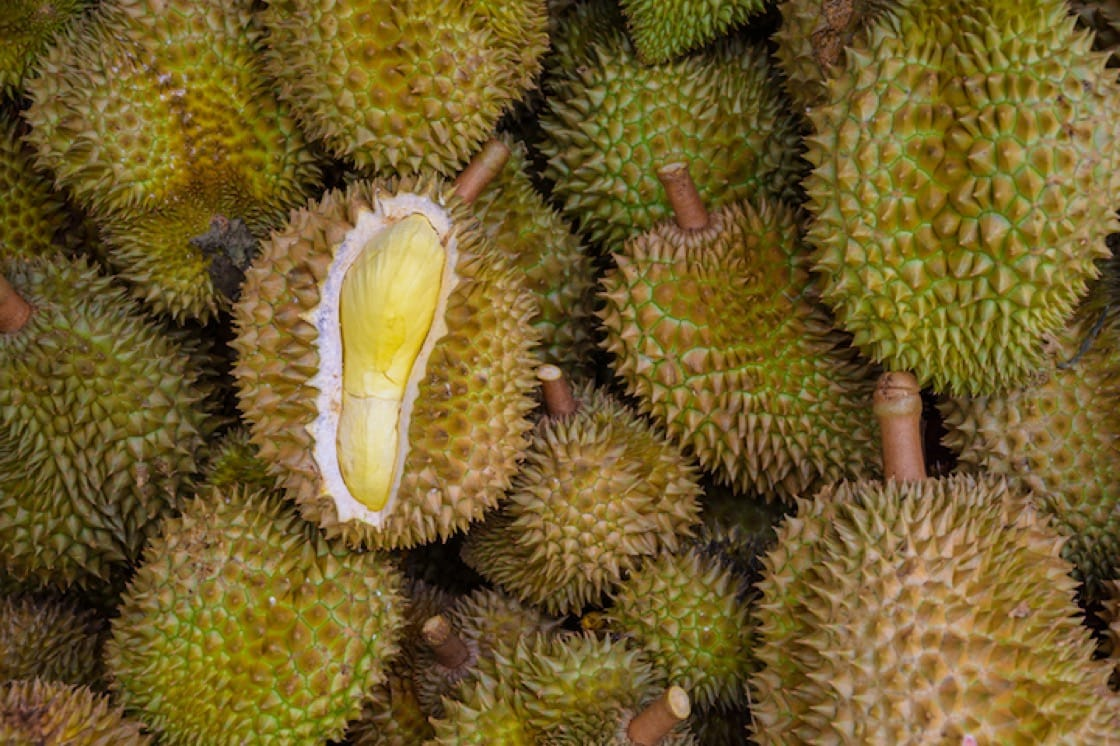 The recent durian windfall in March is about to end soon, but the main durian season of the year is expected to start in June or July of this year.