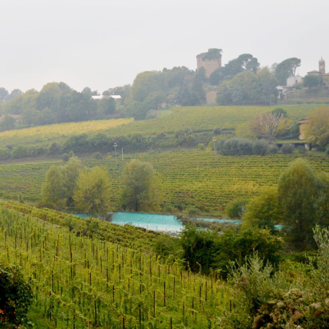 The lush verdant hills of Poderi Morini in Italy's Emilia-Romagna region.