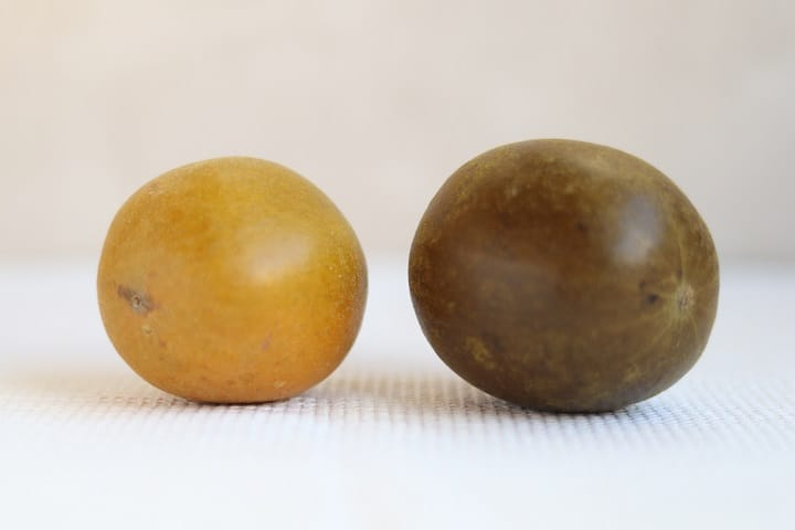 Golden monk fruit (left) looks clearly brighter than the one made by traditional method. (Pic: Joe Chan)