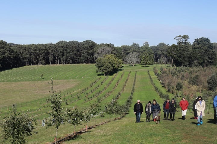 The truffle tours organised by Red Hill Truffle usually consist of less than 14 people.
