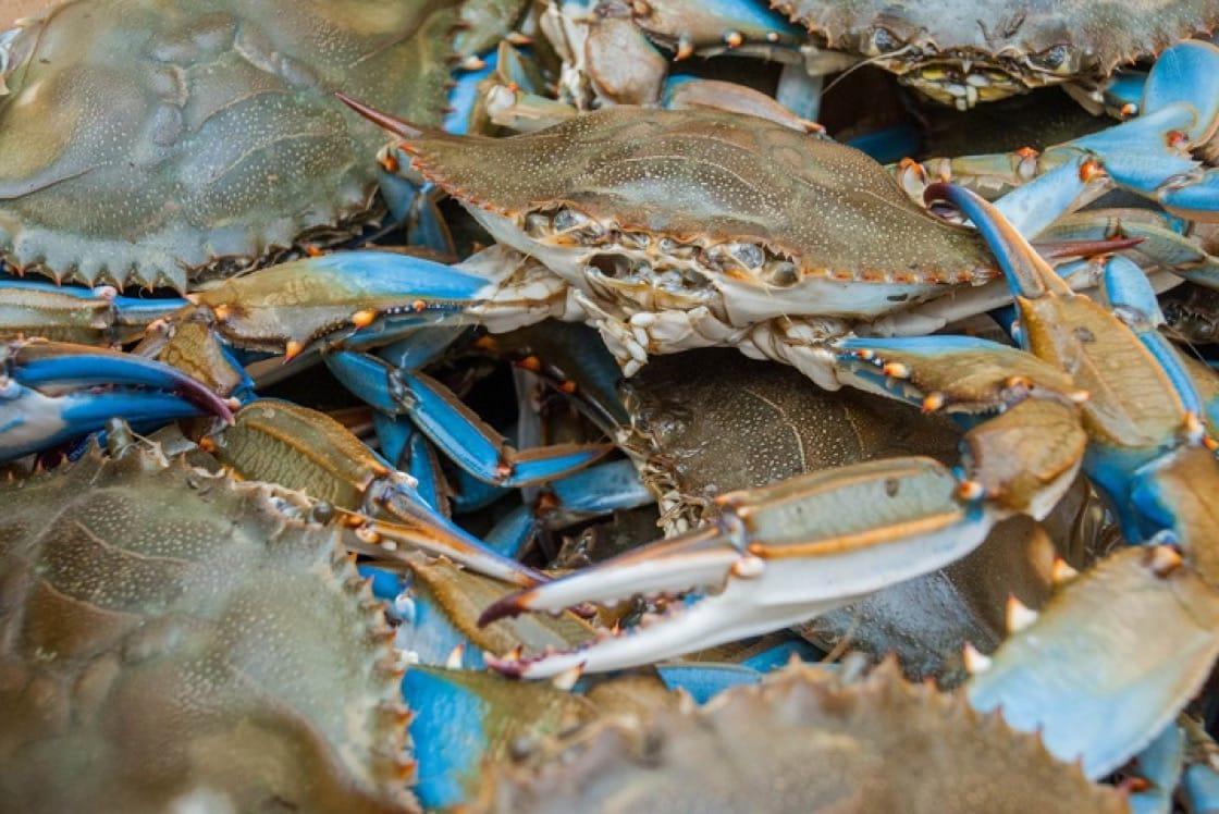 從南到北水域,藍蟹的味道會因為溫度變化的差異,也有所不同。(資料照片)