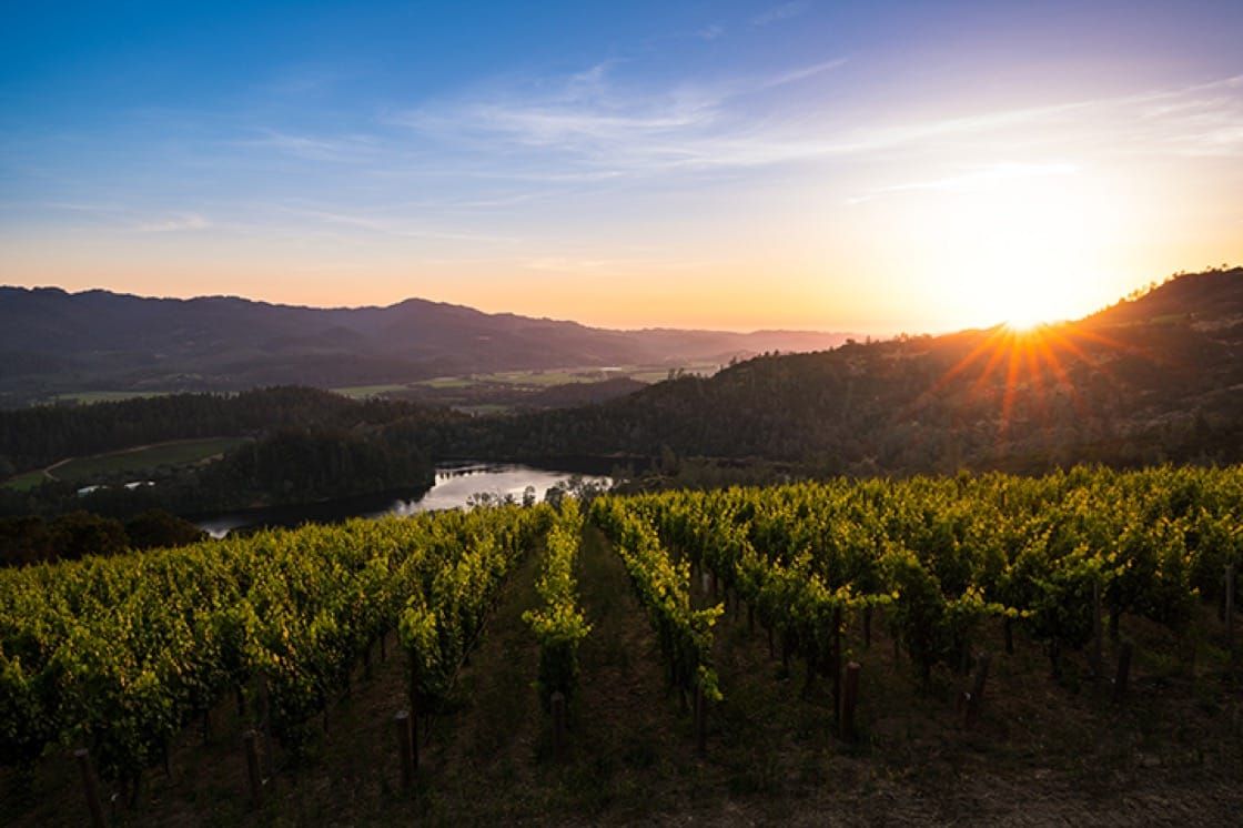 Alan's search for the highest quality expands beyond the vineyard.