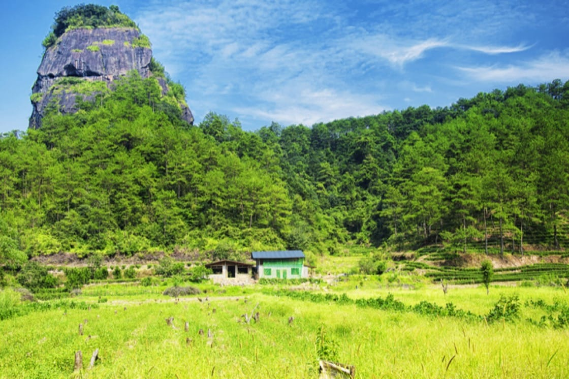 The Wuyi Mountains in Fujian, China are home to rare flora like Da Hong Pao tea trees and wild red mushrooms (Pic: ShutterStock)