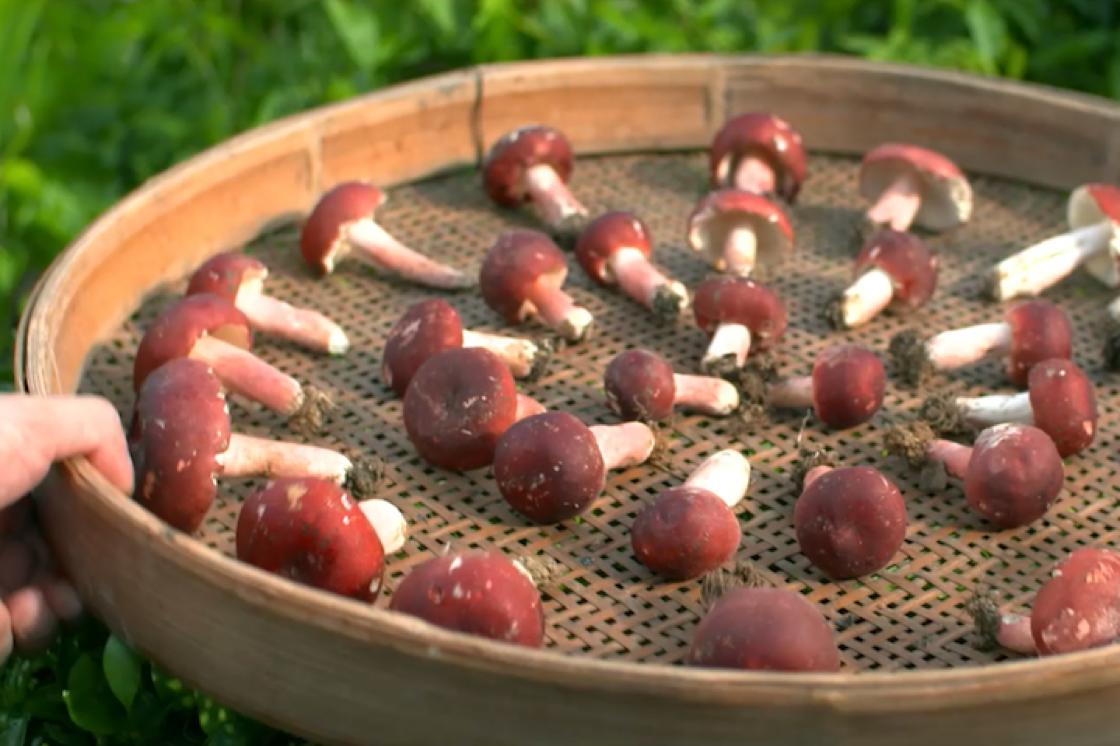 五公斤新鮮紅菇曬乾後只剩下一公斤的乾紅菇。(圖:莆田)
