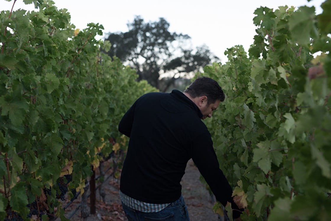 Fayard, winemaker for Purlieu and Le Pich, is involved in a multitude of projects.