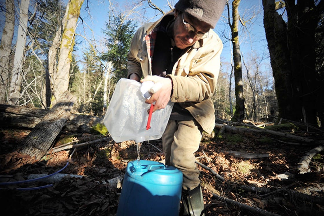 When there's a warming forecasted, members of the West Coast Wild Foods team hike into the woods, tap the trees and attach plastic water jugs to collect the sap. (Photo courtesy of West Coast Wild Foods.)