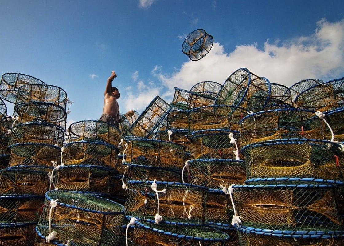 漁民用蟹籠捕捉萬里蟹。照片為2012萬里蟹攝影比賽佳作,謝文欽作品。(新北市政府漁業及漁港事業管理處提供)
