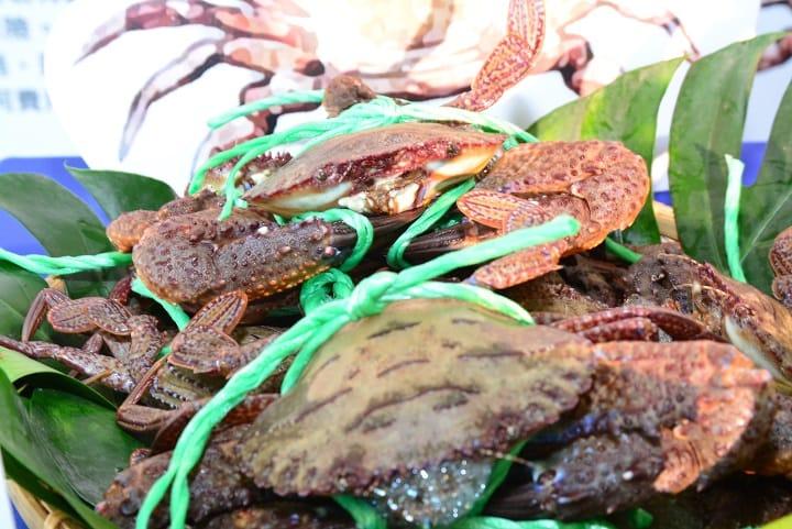 石蟳是萬里蟹中體型最小的,但肉質彈牙,蟹味濃郁。(新北市政府漁業及漁港事業管理處提供)