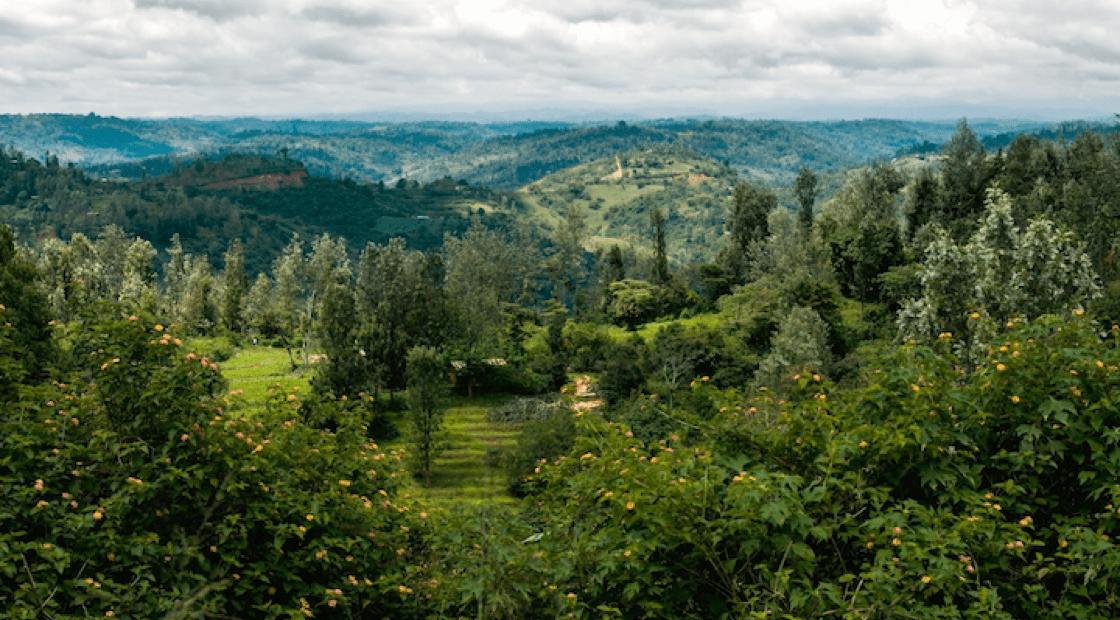 肯亞高原位於赤道之上,日照時間長,晚上清涼,加上該處的火山泥土充滿養分,令出產的咖啡豆擁有出色的酸度及果香。