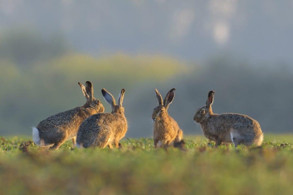法國鄉村地區,每年都會舉行兔肉節。(資料圖片)