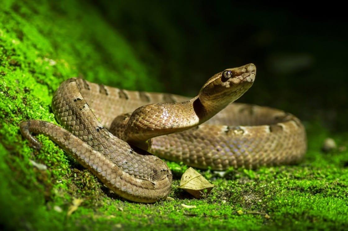 中國南方,一向有吃蛇的傳統。(資料圖片)