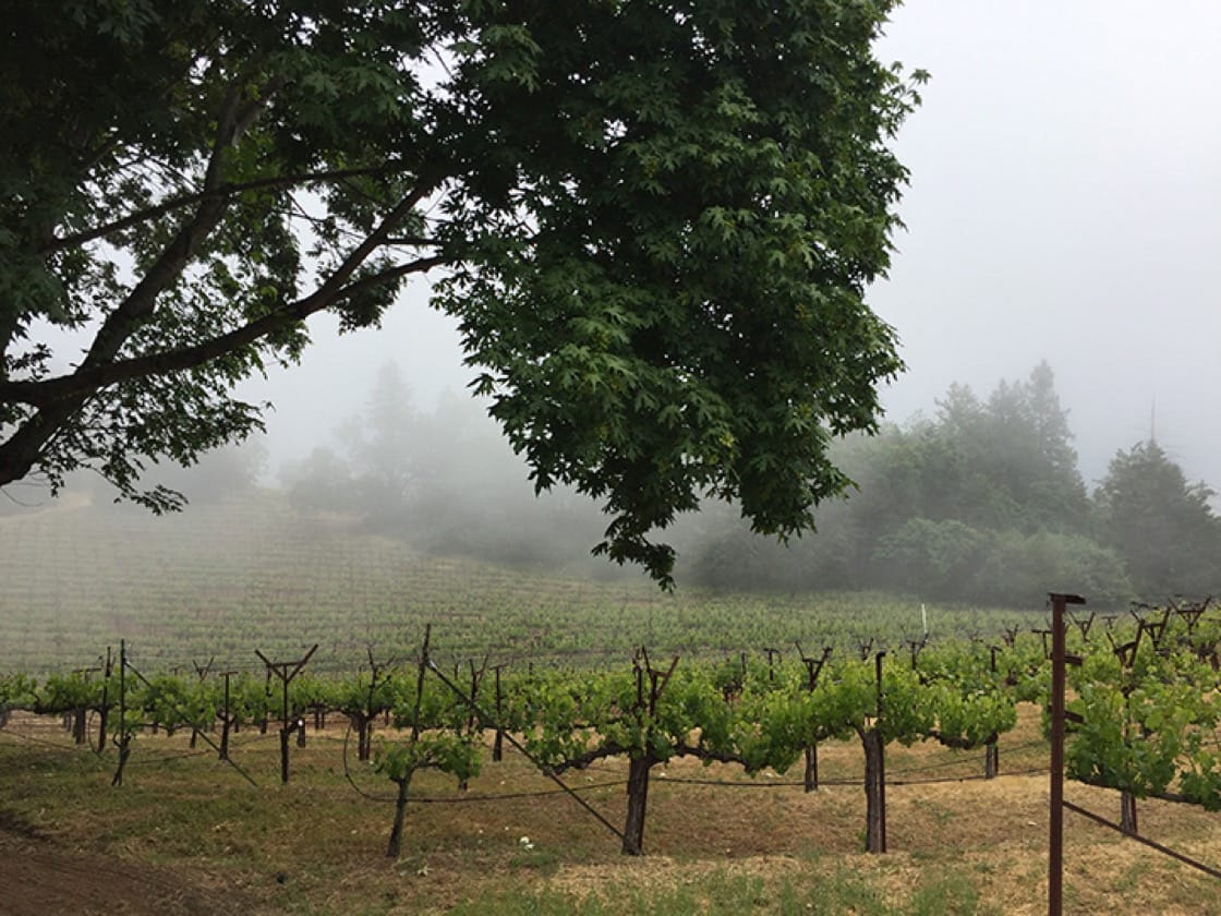 Philip Togni vineyard is located at the top of Spring Mountain in the Napa Valley.