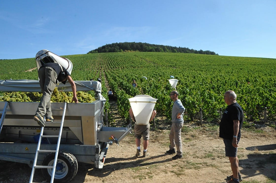 """""""The quality overall in Chablis has gone up in the last five years,"""" says Christian Moreau. """"The vines are getting older. You get more concentration. I think that's a major factor for quality."""""""