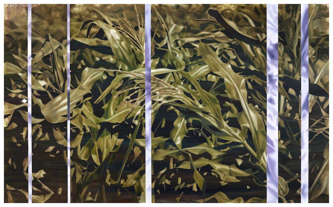 Lin Hung-Hsin's Corn Field