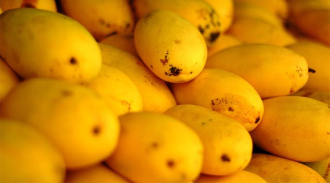 "Nam dok mai mangoes like these are in season in Thailand from March to May. Photo: ""Yellow Mangoes"" by Lemuel Cantos is licensed under CC BY 2.0."