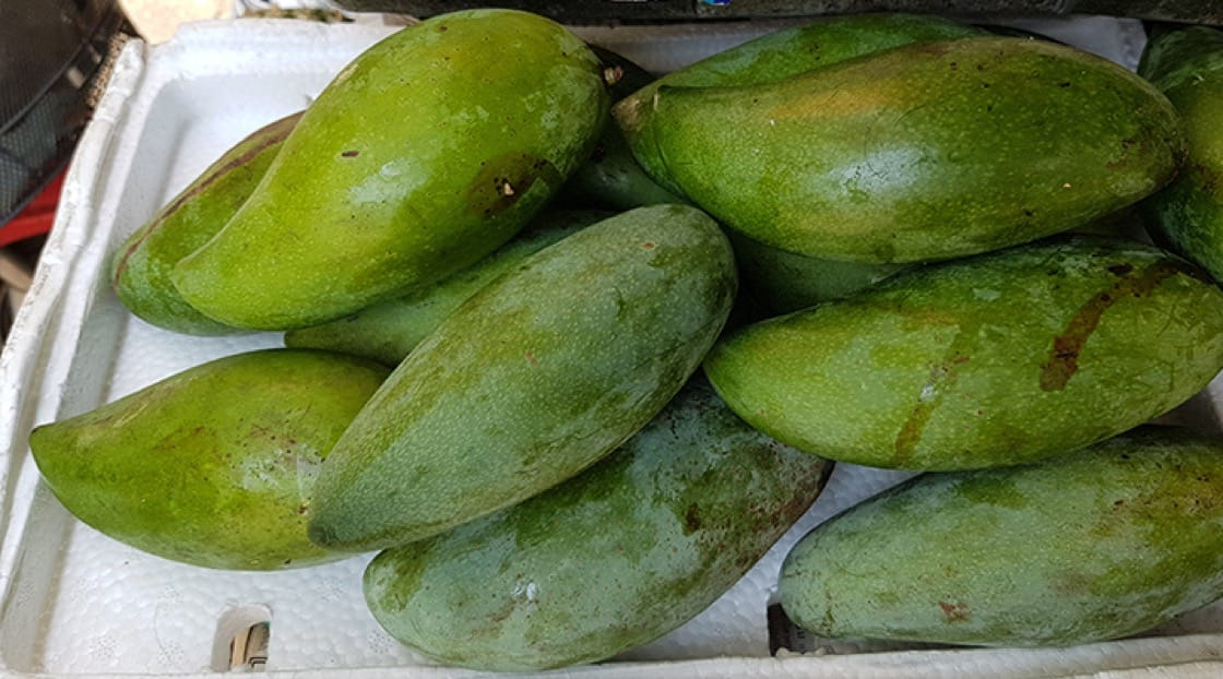 Green mangoes - an option for mango lovers who prefer a firmer texture. Photo credit: Mimi Grachangnetara.