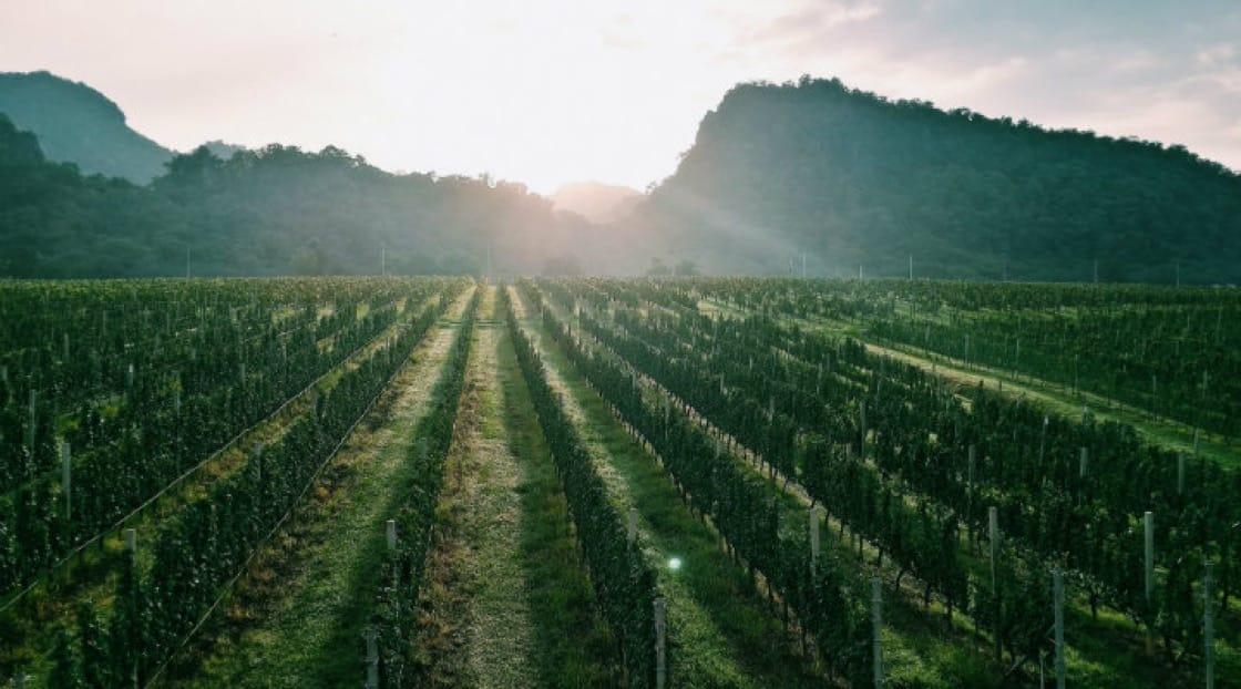 GranMonte Vineyard and Winery in Khao Yai