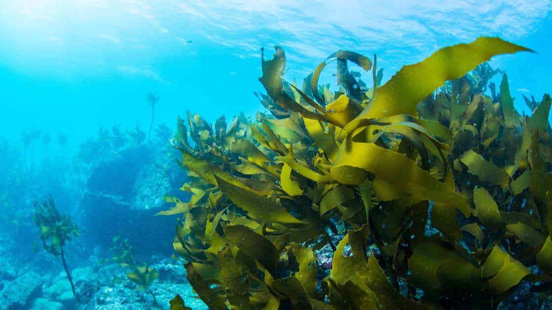 6 Most Common Varieties Of Edible Seaweed