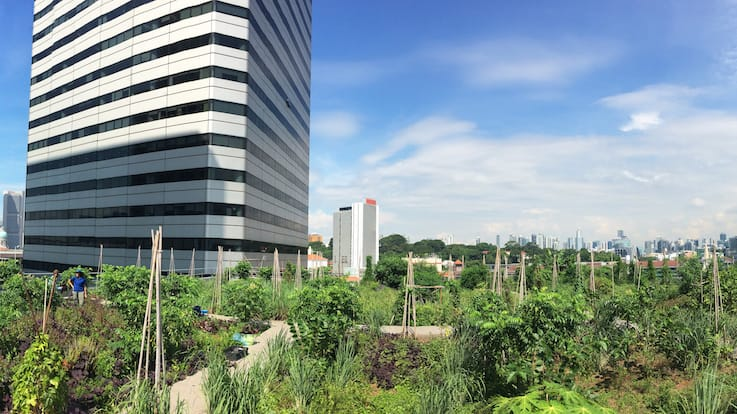The urban farm on the roof of Raffles City (Pic: Edible Garden City)