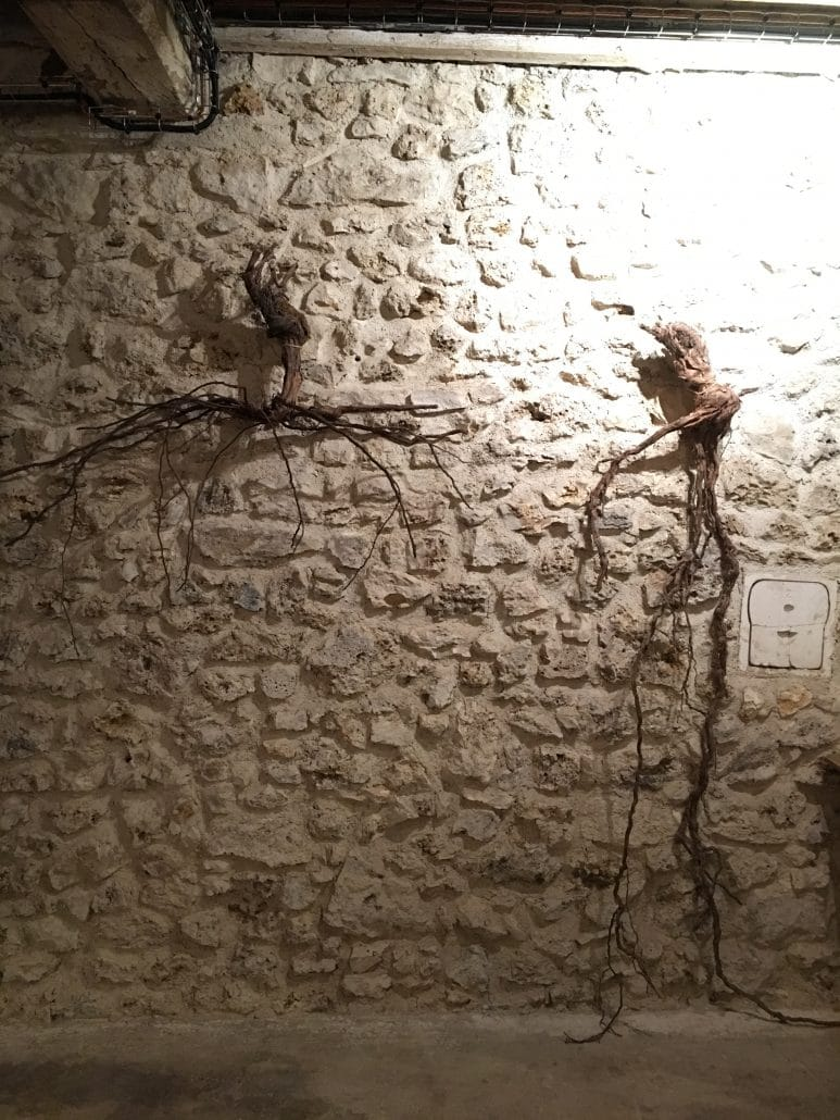 왼쪽: 제초제를 뿌린 포도밭의 뿌리, 오른쪽: 유기농 포도밭의 포도나무 뿌리
