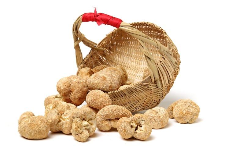 用猴頭菇煲湯,美味又健康。(資料圖片)