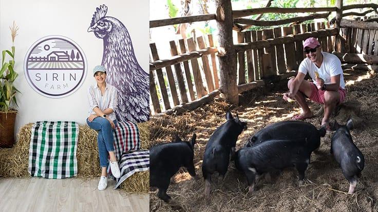 Left: Kathaleeya McIntosh at Sirin Farm's souvenir shop in Chiang Rai.<br>Right: Songkran Grachangnetara with baby Berkshire pigs.