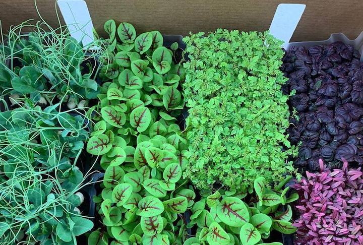 Farm deLight supplies microgreens to many restaurants in Singapore. (Photo: Farm deLight FB Page)