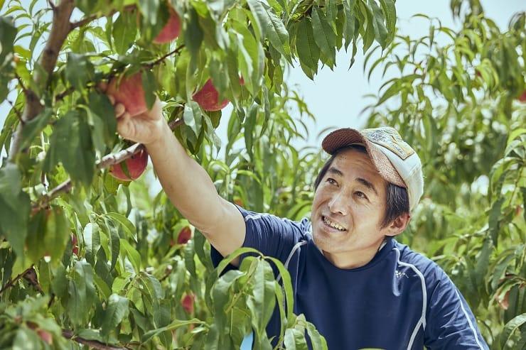 山梨縣的伊東厚,是日本有數的種桃專家。(圖片:Oisix)