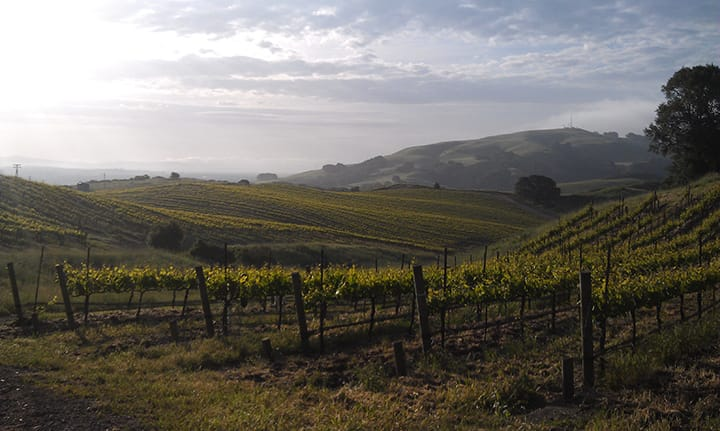 The rolling hills of Rodgers Creek Vineyard at sunrise.