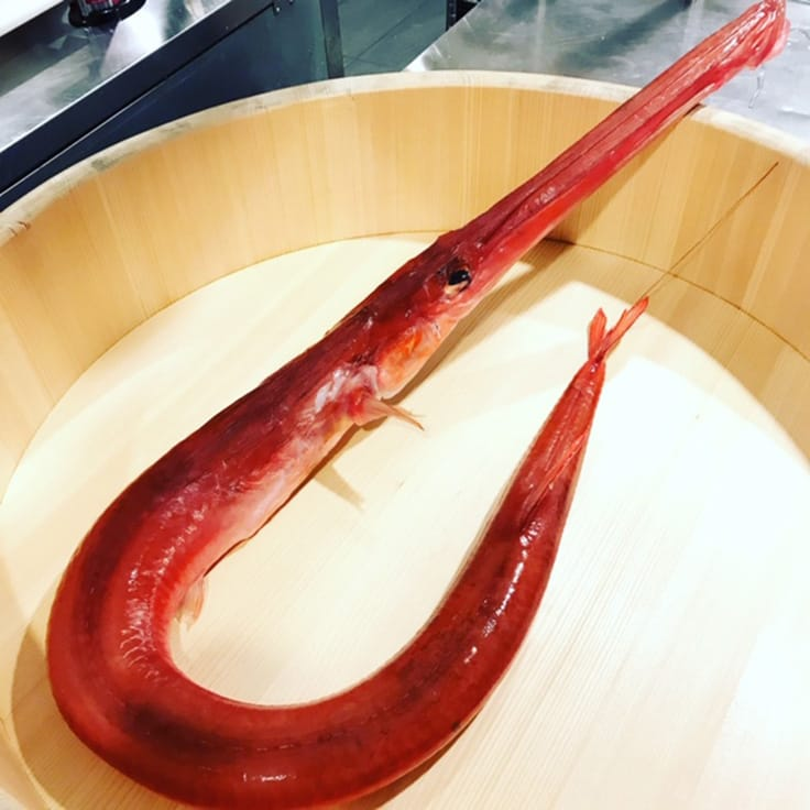 The red cornetfish. (Photo courtesy of Sushi Nakazawa.)