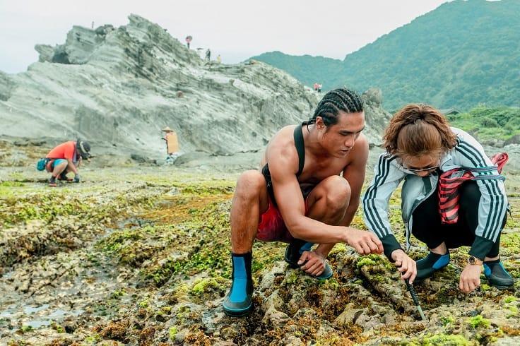 在潮間帶可以採集到各種貝類、海膽。