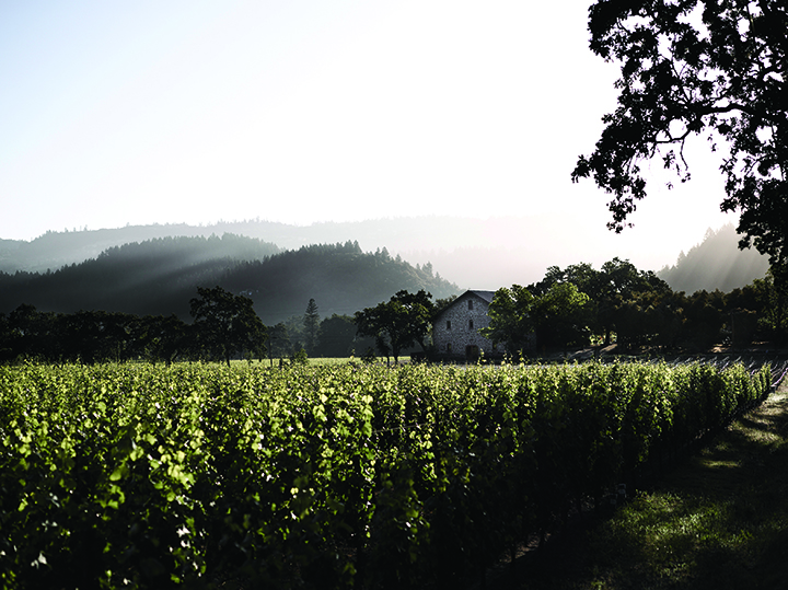 The vineyards at Ehlers Estate. (Photo courtesy of Ehlers Estate.)