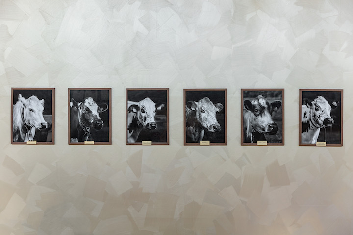 Black-and-white portraits of cows adorn the walls at Credo, which remind diners about the provenance behind the dairy products. (Photo courtesy of Credo.)