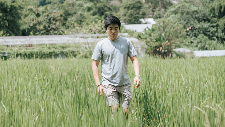 Carefree amidst the rice paddy.